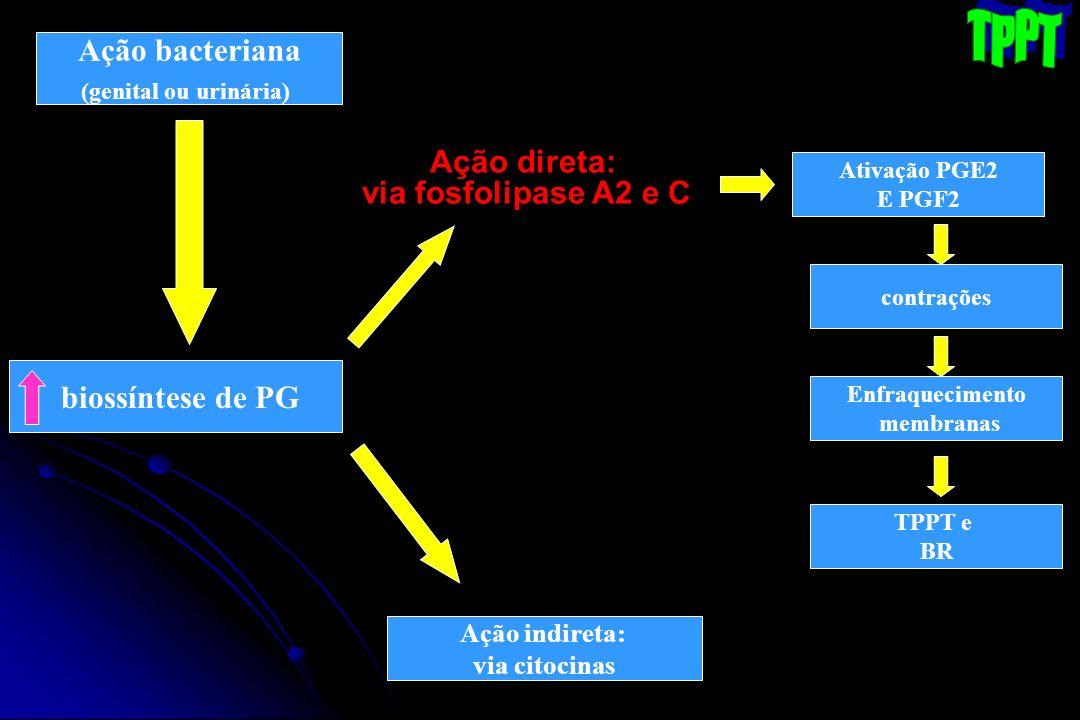 Ação bacteriana (genital ou urinária) Ação direta: via fosfolipase A2 e C biossíntese de PG Ação indireta: via citocinas Ativação PGE2 E PGF2 contraçõ