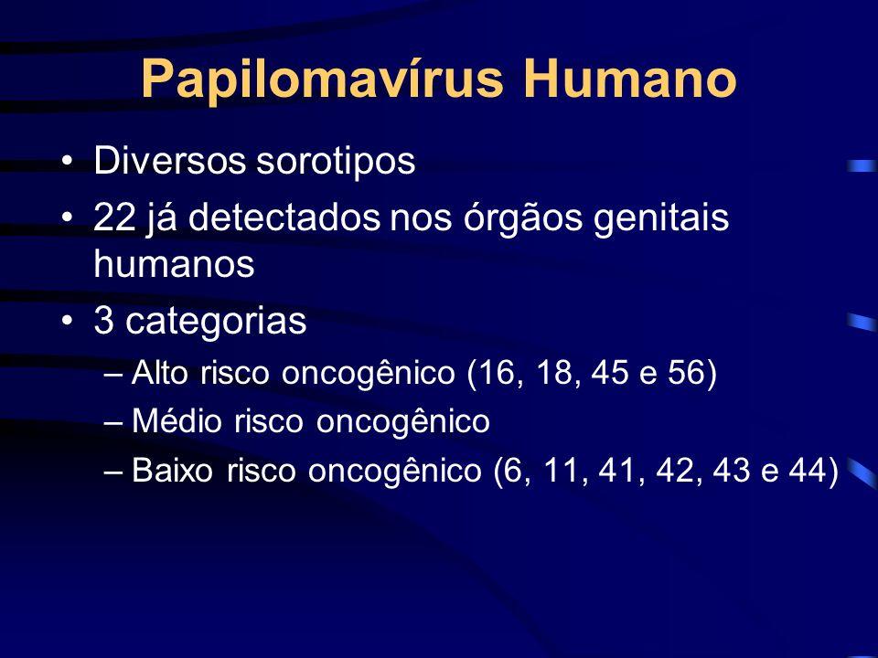 Diversos sorotipos 22 já detectados nos órgãos genitais humanos 3 categorias –Alto risco oncogênico (16, 18, 45 e 56) –Médio risco oncogênico –Baixo r