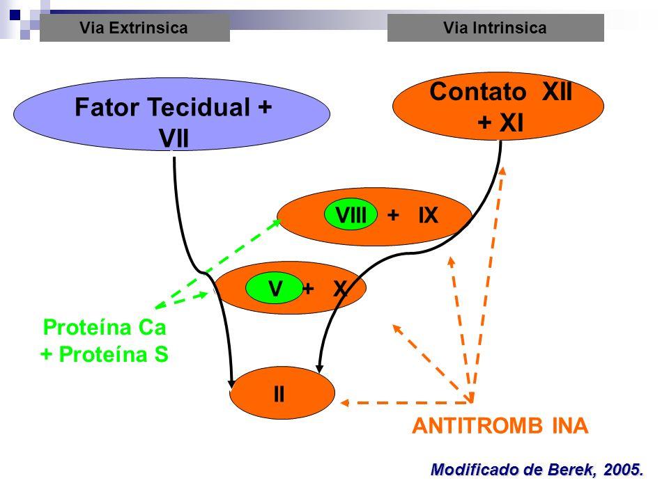Via ExtrinsicaVia Intrinsica Fator Tecidual + VII Contato XII + XI VIII + IX V + X II ANTITROMB INA Proteína Ca + Proteína S Modificado de Berek, 2005