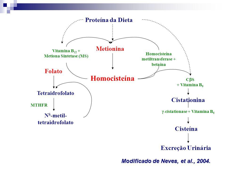 Proteína da Dieta Metionina Homocisteína Vitamina B 12 + Metiona Sintetase (MS) Homocisteína metiltransferase + betaína Folato Tetraidrofolato N S -me