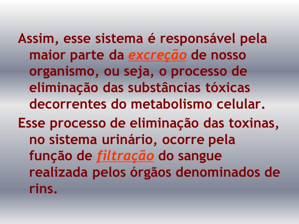 Assim, esse sistema é responsável pela maior parte da excreção de nosso organismo, ou seja, o processo de eliminação das substâncias tóxicas decorrent