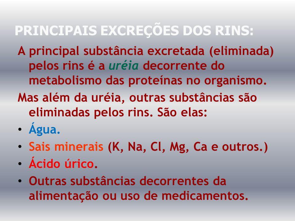 PRINCIPAIS EXCREÇÕES DOS RINS: A principal substância excretada (eliminada) pelos rins é a uréia decorrente do metabolismo das proteínas no organismo.