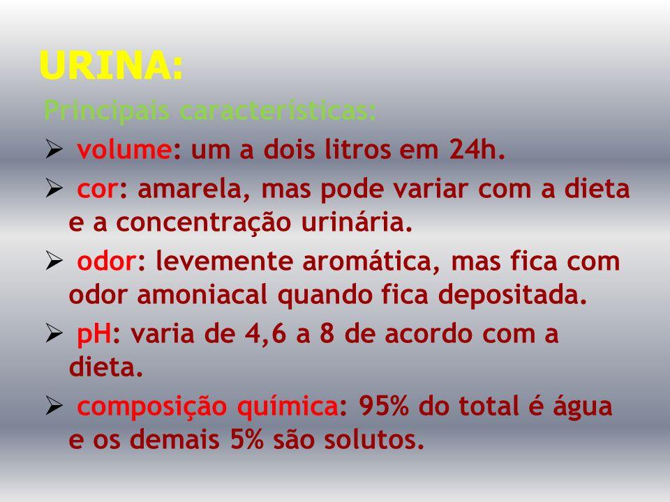 URINA: Principais características: volume: um a dois litros em 24h. cor: amarela, mas pode variar com a dieta e a concentração urinária. odor: levemen