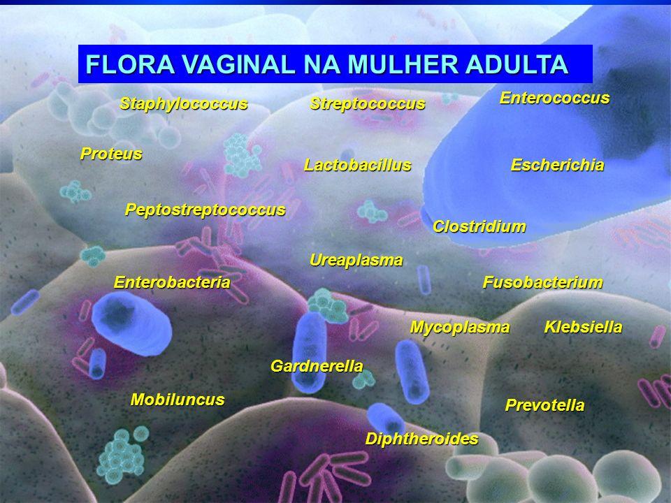 StaphylococcusStreptococcus Enterococcus EscherichiaLactobacillus Fusobacterium Klebsiella Gardnerella Diphtheroides Proteus Prevotella Mobiluncus Ent