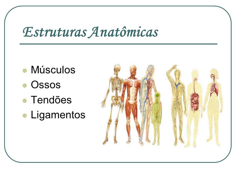 Estruturas Anatômicas Músculos Ossos Tendões Ligamentos