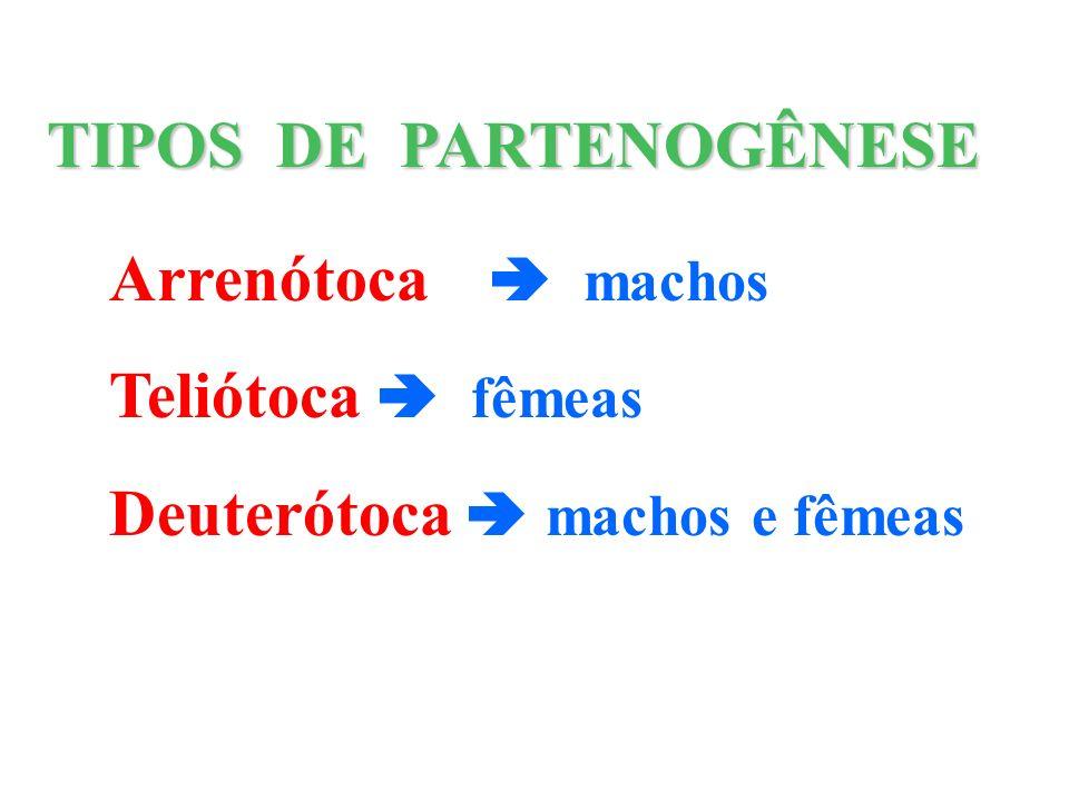 Arrenótoca machos Teliótoca fêmeas Deuterótoca machos e fêmeas TIPOS DE PARTENOGÊNESE
