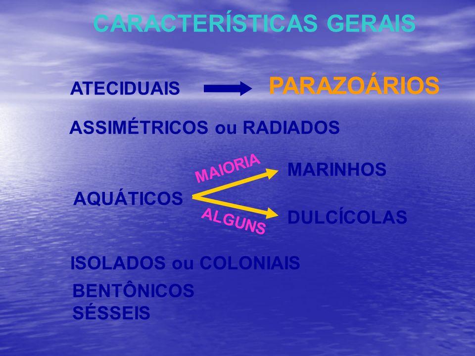 CARACTERÍSTICAS GERAIS ATECIDUAIS ASSIMÉTRICOS ou RADIADOS PARAZOÁRIOS ISOLADOS ou COLONIAIS AQUÁTICOS MARINHOS MAIORIA DULCÍCOLAS ALGUNS BENTÔNICOS S