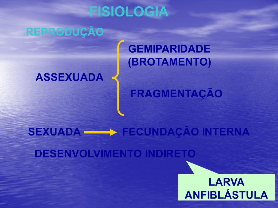 FISIOLOGIA REPRODUÇÃO ASSEXUADA GEMIPARIDADE (BROTAMENTO) FRAGMENTAÇÃO SEXUADAFECUNDAÇÃO INTERNA DESENVOLVIMENTO INDIRETO LARVA ANFIBLÁSTULA