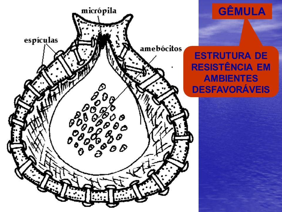 GÊMULA ESTRUTURA DE RESISTÊNCIA EM AMBIENTES DESFAVORÁVEIS