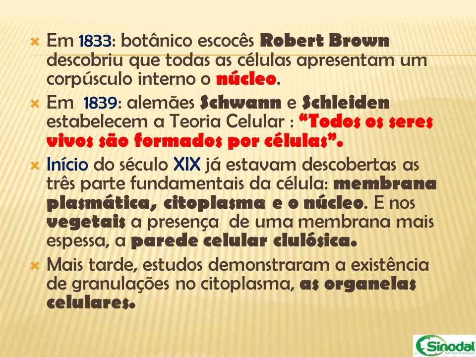 Em 1833: botânico escocês Robert Brown descobriu que todas as células apresentam um corpúsculo interno o núcleo. Em 1839: alemães Schwann e Schleiden