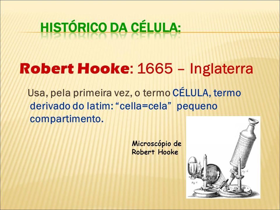 Robert Hooke : 1665 – Inglaterra Usa, pela primeira vez, o termo CÉLULA, termo derivado do latim: cella=cela pequeno compartimento. Microscópio de Rob