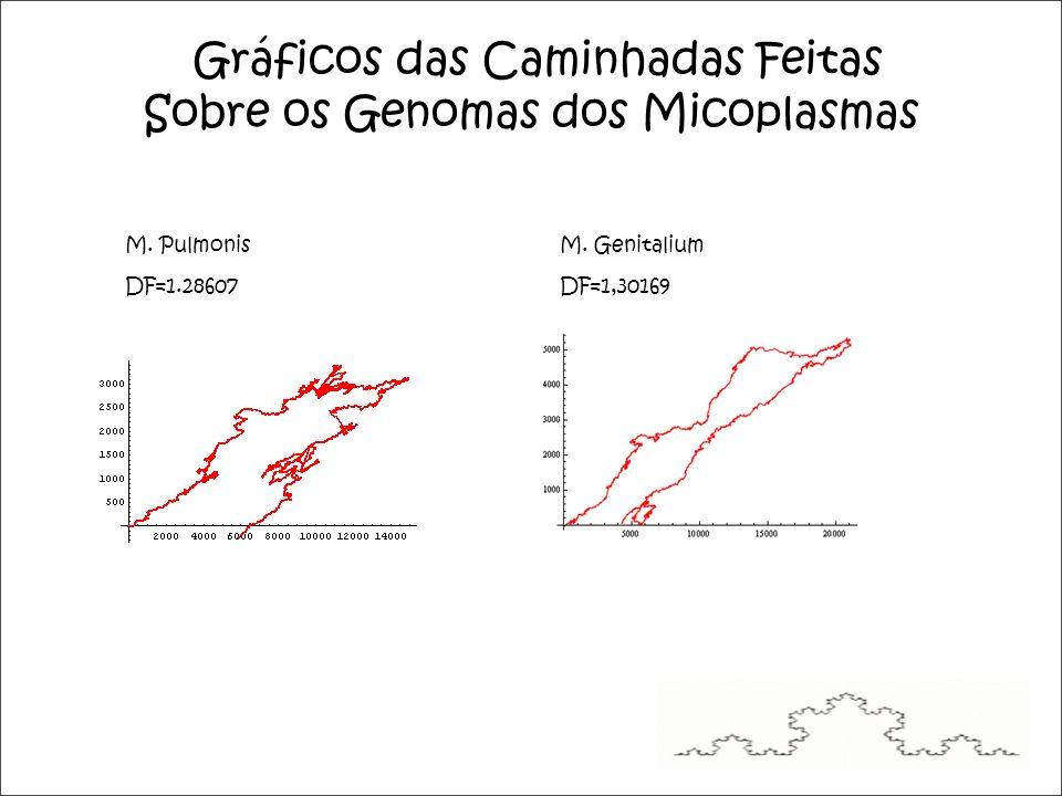 Gráficos das Caminhadas Feitas Sobre os Genomas dos Micoplasmas M.