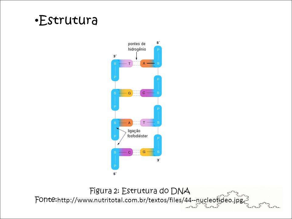 Figura 2: Estrutura do DNA Fonte: http://www.nutritotal.com.br/textos/files/44--nucleotideo.jpg.
