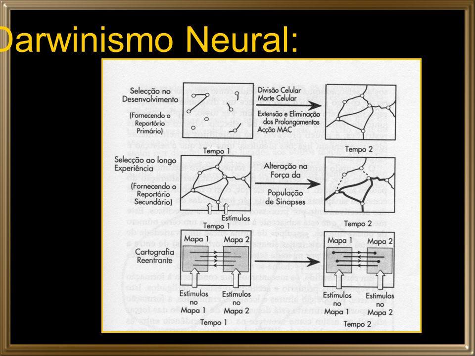 Darwinismo Neural:
