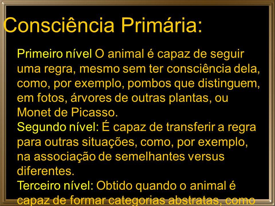 Consciência Primária: Primeiro nível O animal é capaz de seguir uma regra, mesmo sem ter consciência dela, como, por exemplo, pombos que distinguem, e
