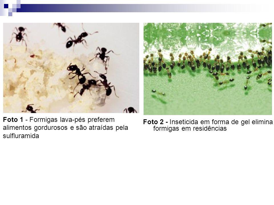 Foto 1 - Formigas lava-pés preferem alimentos gordurosos e são atraídas pela sulfluramida Foto 2 - Inseticida em forma de gel elimina formigas em resi
