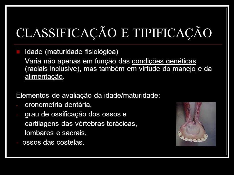 CLASSIFICAÇÃO E TIPIFICAÇÃO DE CARCAÇAS BOVINAS TIPOSEXOMATURIDADEACABAMENTOCONFORMAÇÃOPESO MÍN.