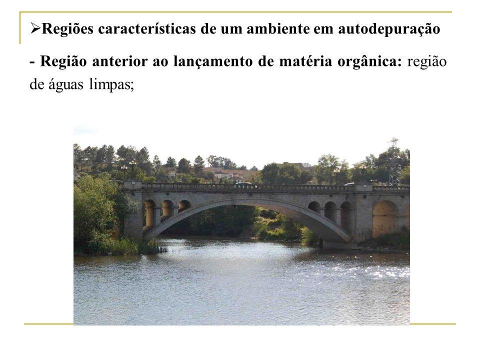 Regiões características de um ambiente em autodepuração - Região anterior ao lançamento de matéria orgânica: região de águas limpas;