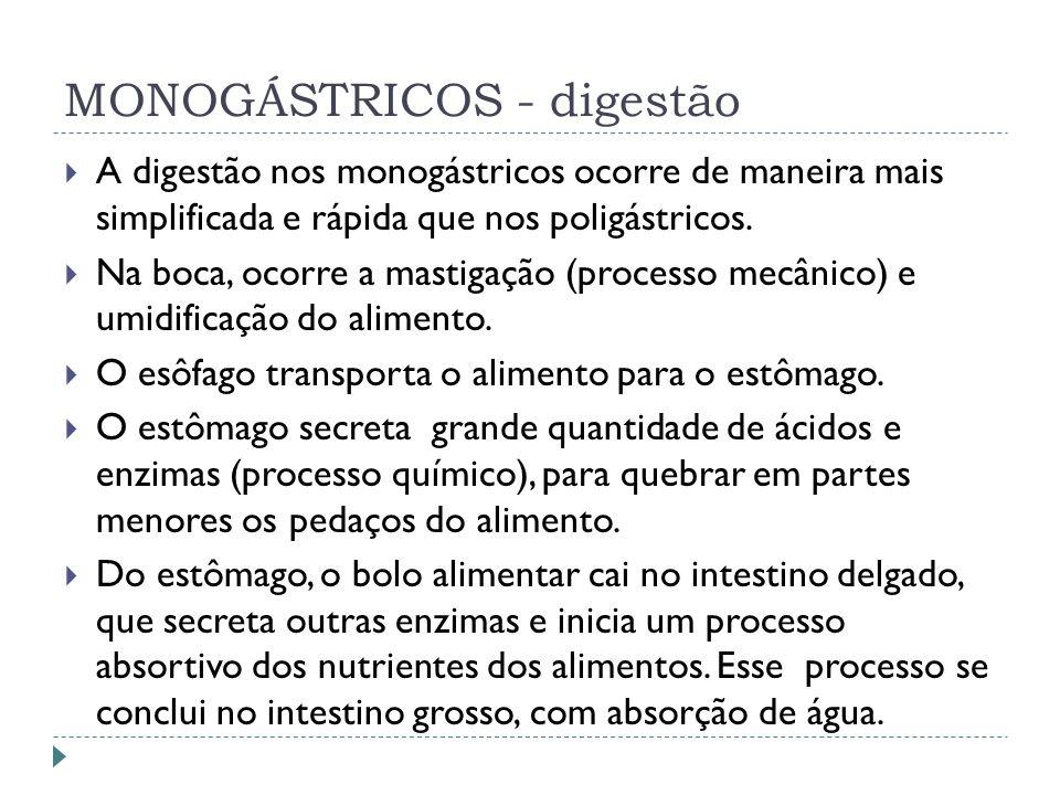 MONOGÁSTRICOS - digestão A digestão nos monogástricos ocorre de maneira mais simplificada e rápida que nos poligástricos. Na boca, ocorre a mastigação