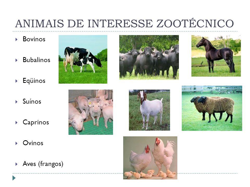 ANIMAIS DE INTERESSE ZOOTÉCNICO Bovinos Bubalinos Eqüinos Suínos Caprinos Ovinos Aves (frangos)