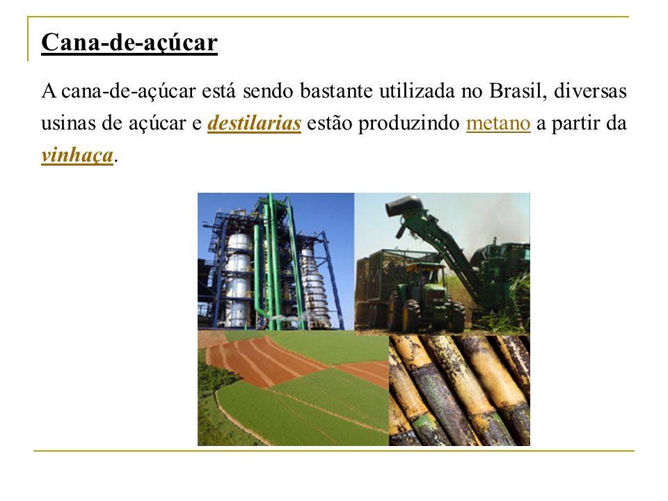 Cana-de-açúcar A cana-de-açúcar está sendo bastante utilizada no Brasil, diversas usinas de açúcar e destilarias estão produzindo metano a partir da vinhaça.destilariasmetano vinhaça