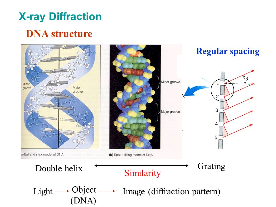 DNA structure Double helix Grating Similarity X-ray Diffraction Regular spacing Light Object (DNA) Image (diffraction pattern)