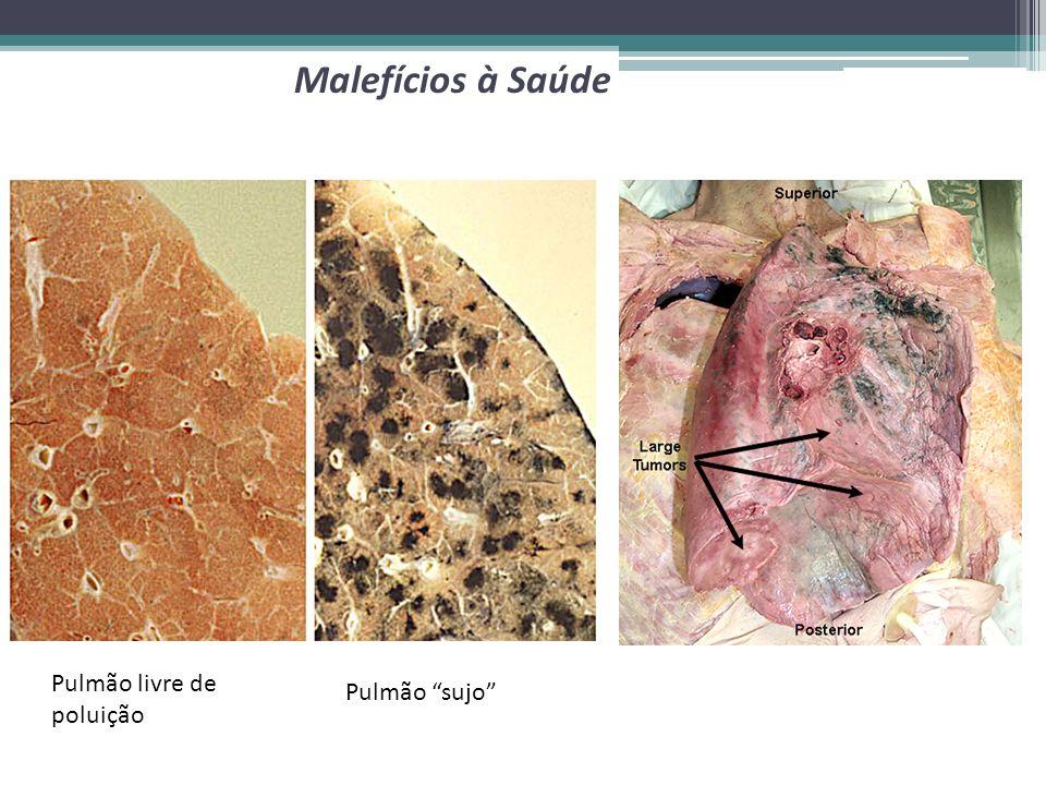 Pulmão livre de poluição Pulmão sujo Malefícios à Saúde