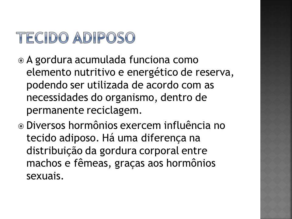 A gordura acumulada funciona como elemento nutritivo e energético de reserva, podendo ser utilizada de acordo com as necessidades do organismo, dentro
