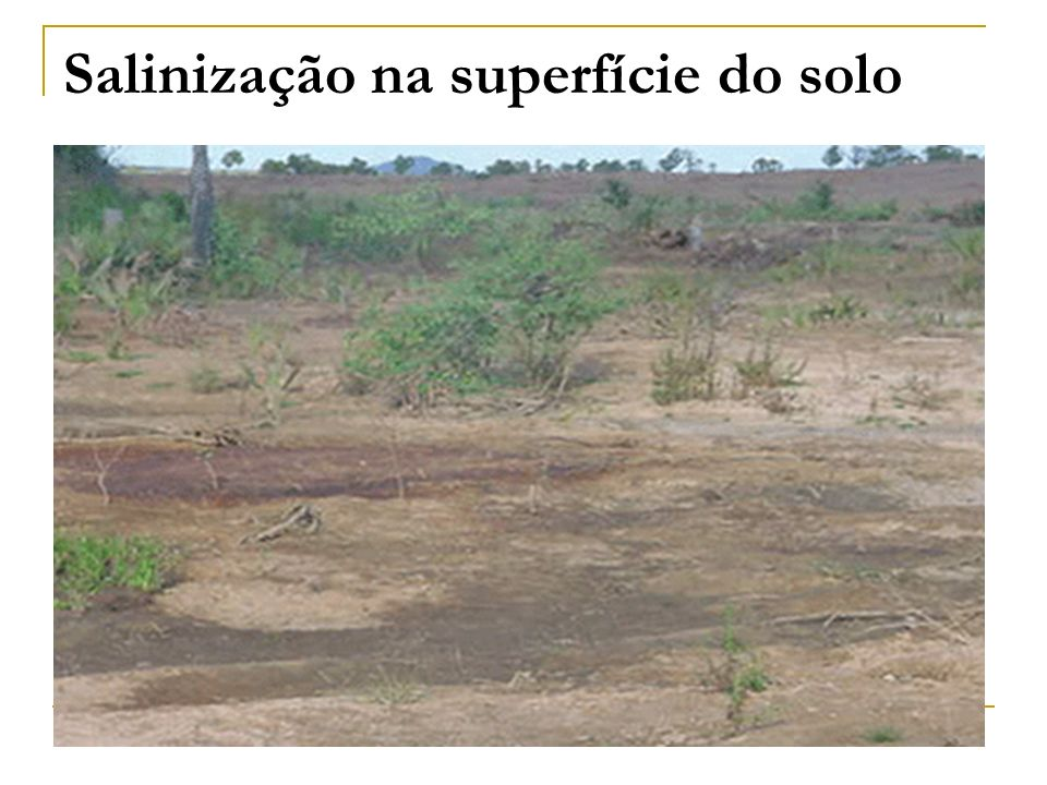 Salinização na superfície do solo