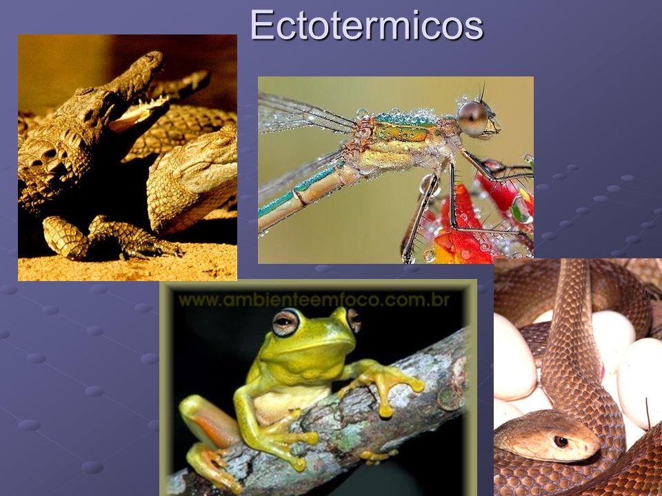 Ectotermicos