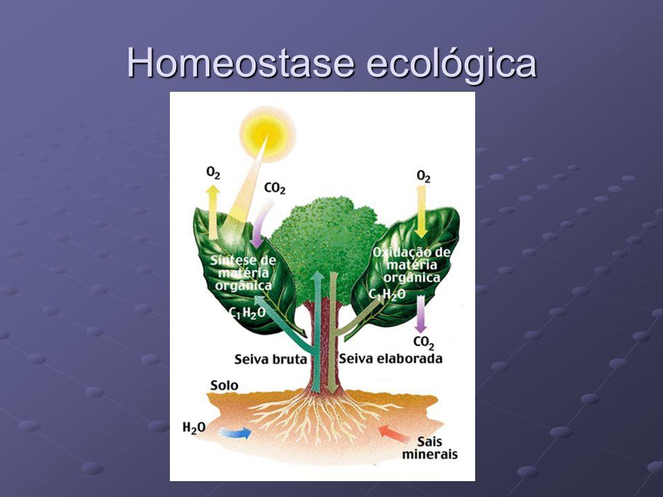 Homeostase ecológica