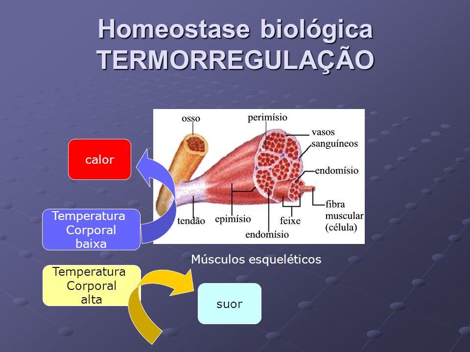 Homeostase biológica TERMORREGULAÇÃO Músculos esqueléticos calor Temperatura Corporal baixa Temperatura Corporal alta suor