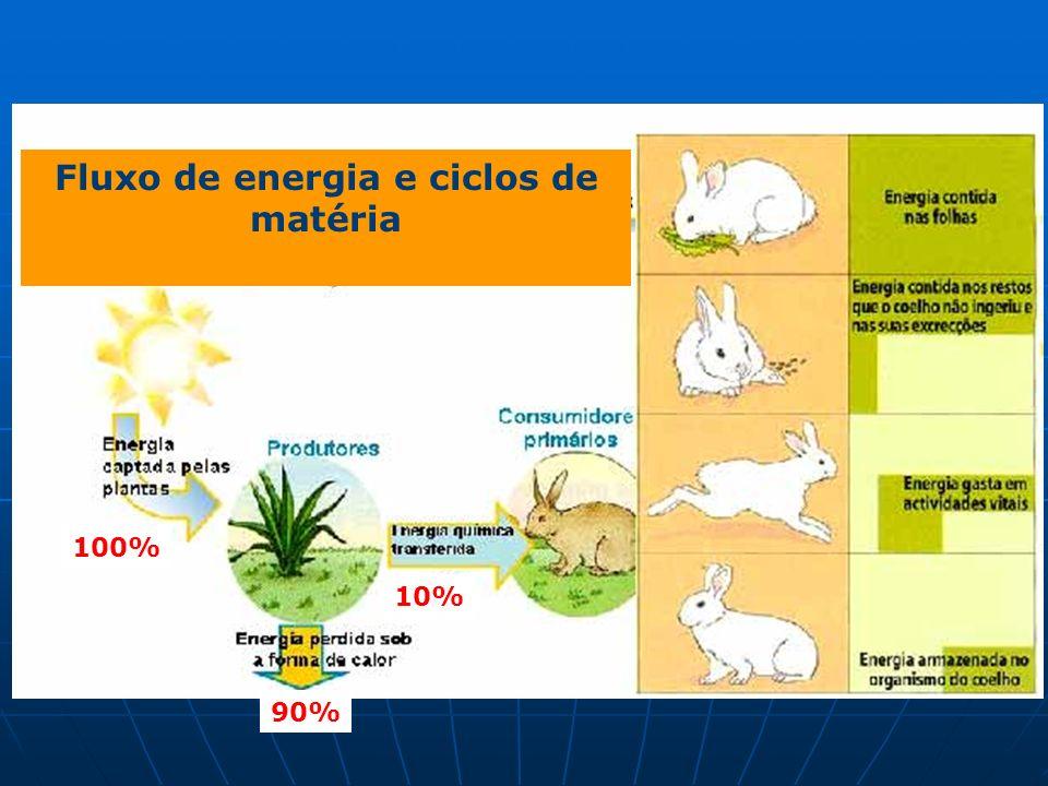 Fluxo de energia e ciclos de matéria 90% 100% 10%