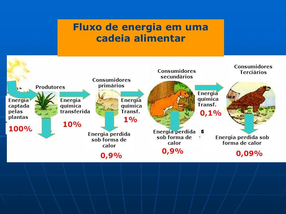 Fluxo de energia em uma cadeia alimentar Energia captada pelas plantas Produtores Energia química transferida 100% Consumidores primários Consumidores secundários Energia perdida sob forma de calor 0,9% Energia perdida sob forma de calor 0,9% 10% Energia química Transf.