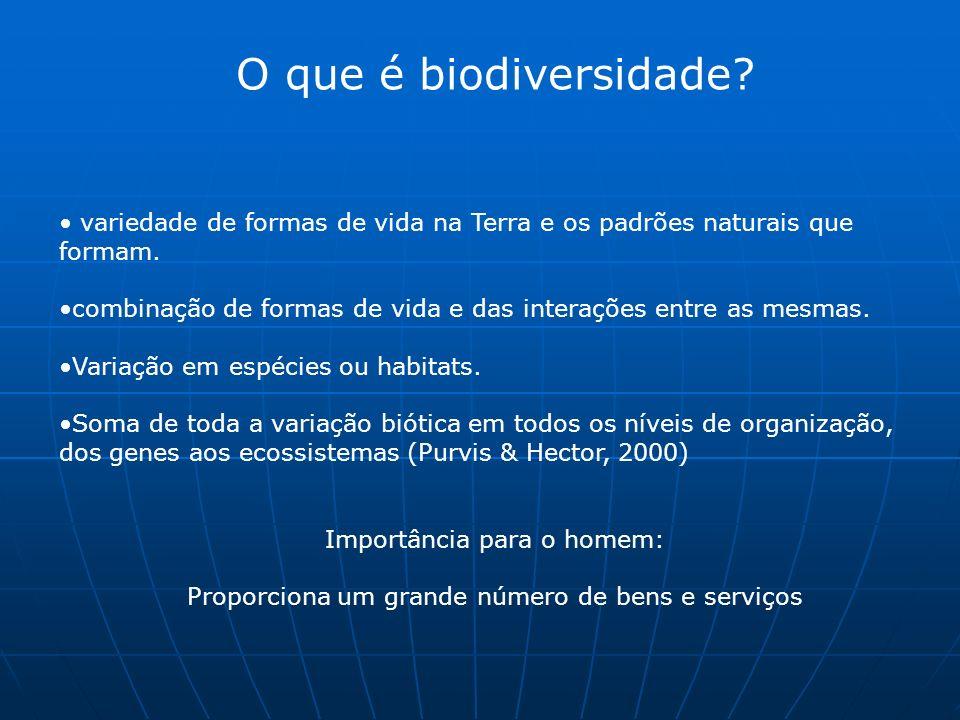 O que é biodiversidade. variedade de formas de vida na Terra e os padrões naturais que formam.
