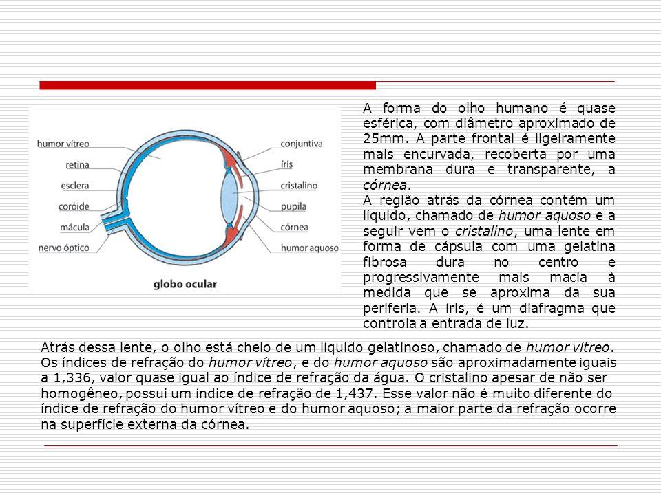 A forma do olho humano é quase esférica, com diâmetro aproximado de 25mm. A parte frontal é ligeiramente mais encurvada, recoberta por uma membrana du
