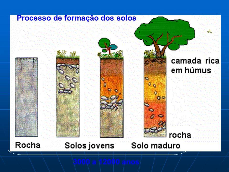 Processo de formação dos solos 3000 a 12000 anos