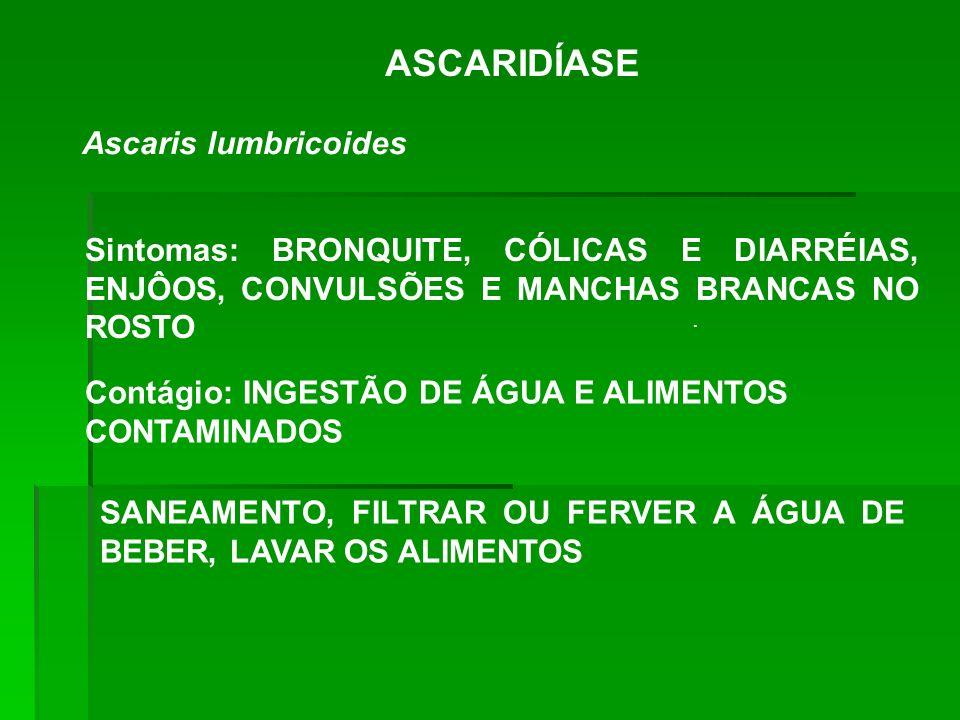ASCARIDÍASE Ascaris lumbricoides. Sintomas: BRONQUITE, CÓLICAS E DIARRÉIAS, ENJÔOS, CONVULSÕES E MANCHAS BRANCAS NO ROSTO Contágio: INGESTÃO DE ÁGUA E