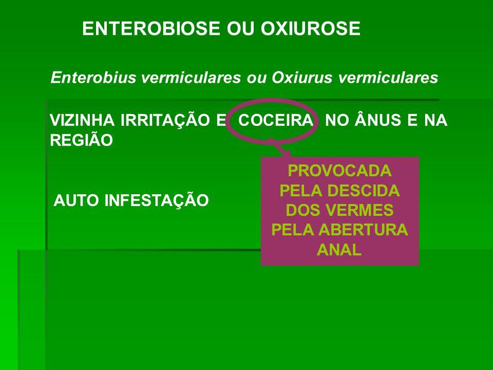 ENTEROBIOSE OU OXIUROSE Enterobius vermiculares ou Oxiurus vermiculares VIZINHA IRRITAÇÃO E COCEIRA NO ÂNUS E NA REGIÃO PROVOCADA PELA DESCIDA DOS VER