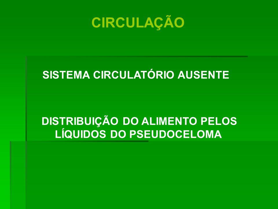 CIRCULAÇÃO DISTRIBUIÇÃO DO ALIMENTO PELOS LÍQUIDOS DO PSEUDOCELOMA SISTEMA CIRCULATÓRIO AUSENTE
