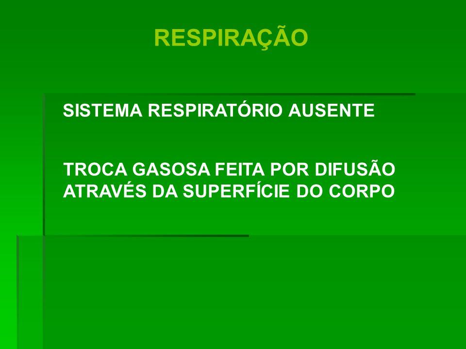RESPIRAÇÃO TROCA GASOSA FEITA POR DIFUSÃO ATRAVÉS DA SUPERFÍCIE DO CORPO SISTEMA RESPIRATÓRIO AUSENTE