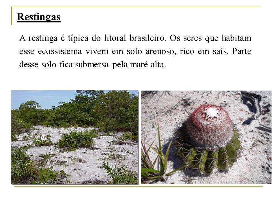 Restingas A restinga é típica do litoral brasileiro. Os seres que habitam esse ecossistema vivem em solo arenoso, rico em sais. Parte desse solo fica