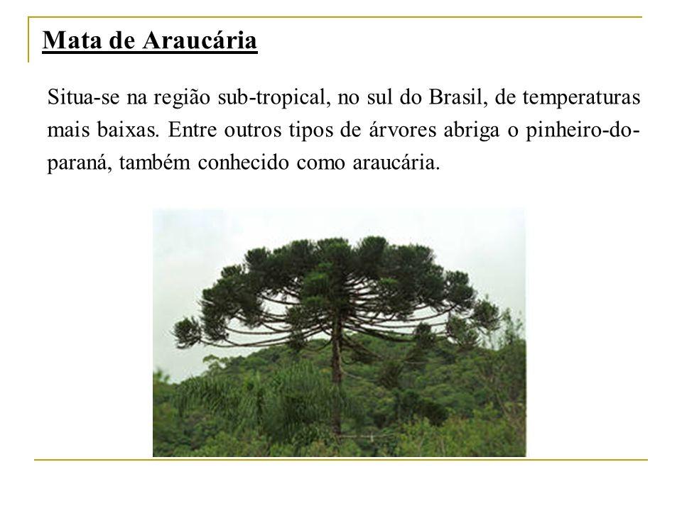Mata de Araucária Situa-se na região sub-tropical, no sul do Brasil, de temperaturas mais baixas. Entre outros tipos de árvores abriga o pinheiro-do-