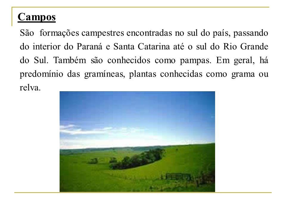 Campos São formações campestres encontradas no sul do país, passando do interior do Paraná e Santa Catarina até o sul do Rio Grande do Sul. Também são