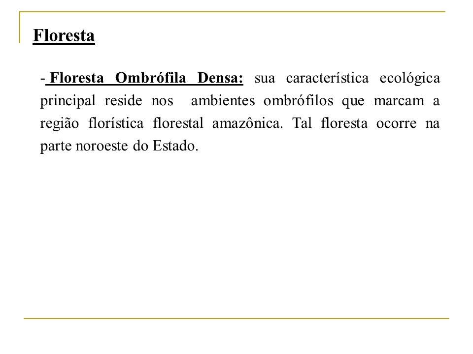 - Floresta Ombrófila Densa: sua característica ecológica principal reside nos ambientes ombrófilos que marcam a região florística florestal amazônica.