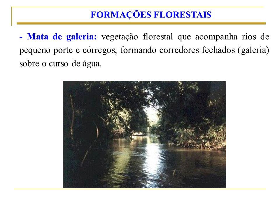 - Mata de galeria: vegetação florestal que acompanha rios de pequeno porte e córregos, formando corredores fechados (galeria) sobre o curso de água. F