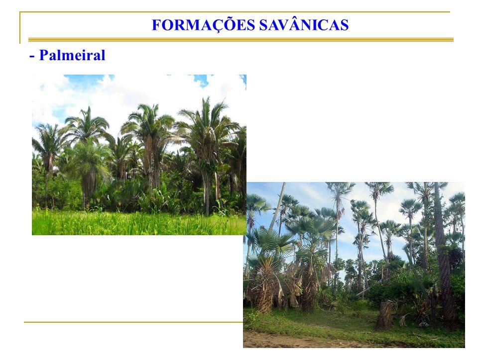 - Palmeiral FORMAÇÕES SAVÂNICAS