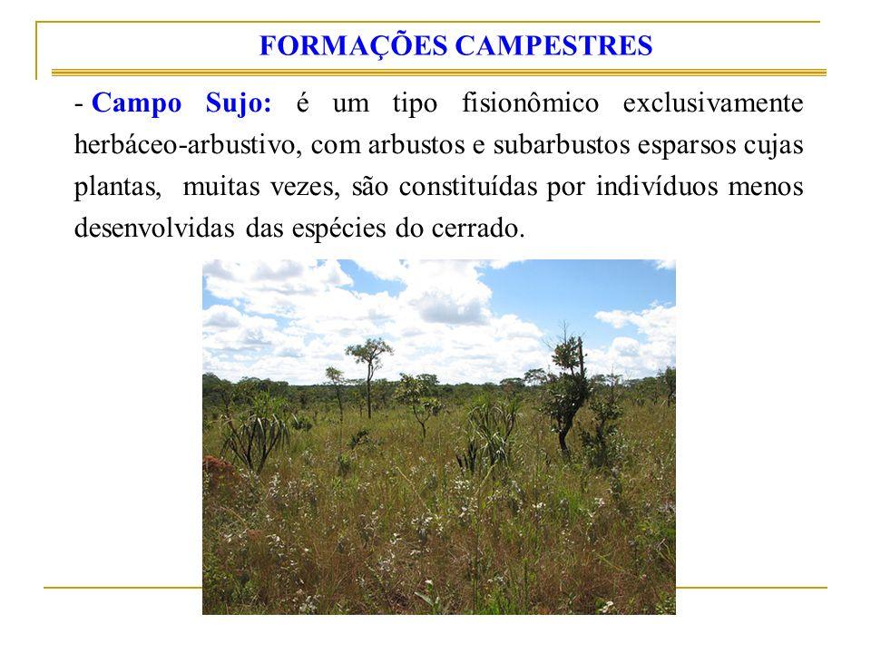 - Campo Sujo: é um tipo fisionômico exclusivamente herbáceo-arbustivo, com arbustos e subarbustos esparsos cujas plantas, muitas vezes, são constituídas por indivíduos menos desenvolvidas das espécies do cerrado.