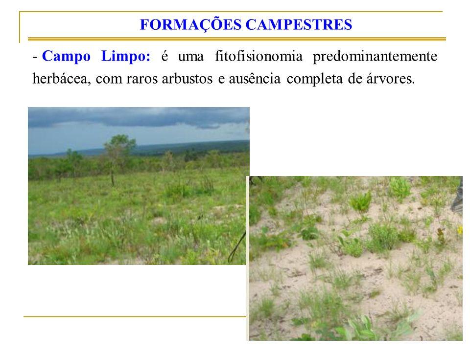 - Campo Limpo: é uma fitofisionomia predominantemente herbácea, com raros arbustos e ausência completa de árvores. FORMAÇÕES CAMPESTRES