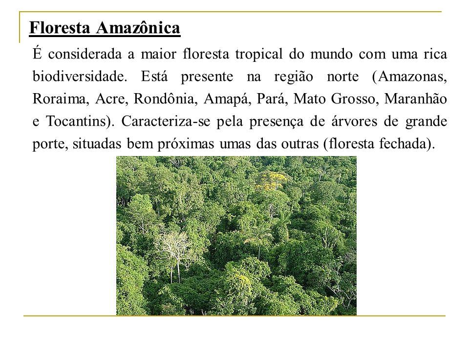 Floresta Amazônica É considerada a maior floresta tropical do mundo com uma rica biodiversidade. Está presente na região norte (Amazonas, Roraima, Acr